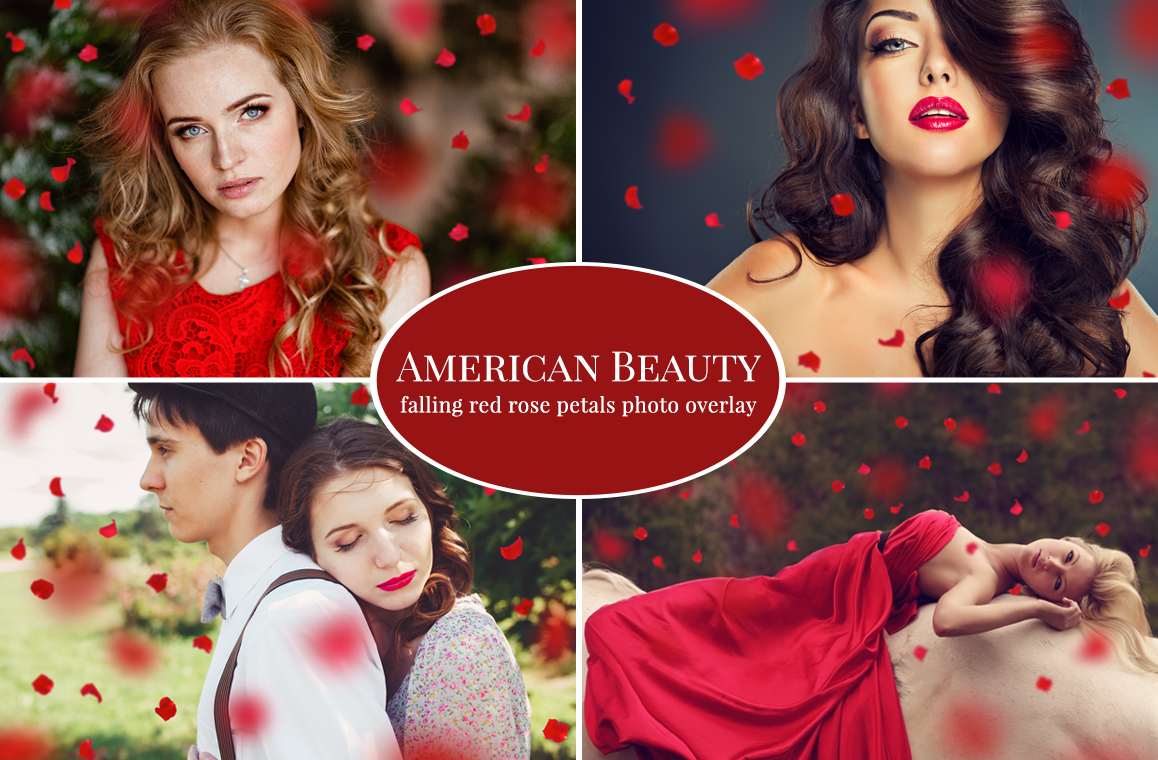 American-Beauty-red-petals-overlay