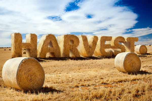 create-stylized-hay-bale-typography-in-photoshop