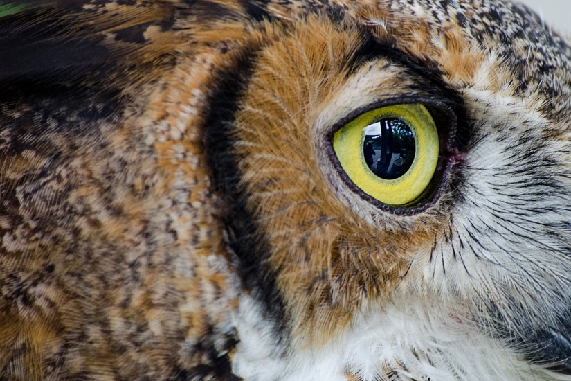 eye-wildlife-animal-bird