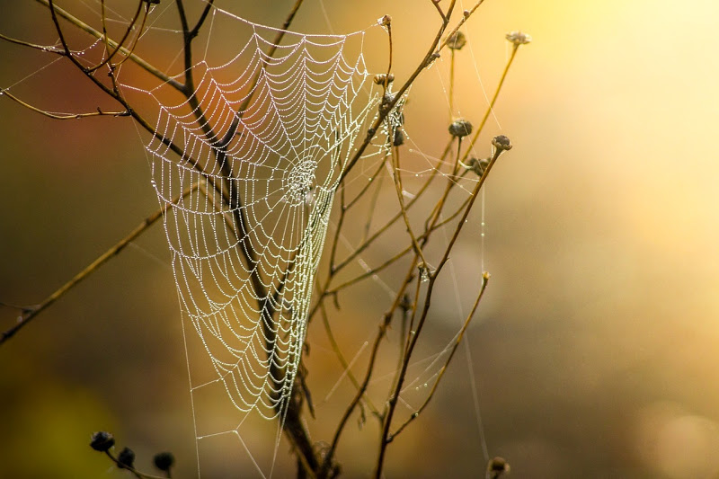 spider-web-with-dew-drops