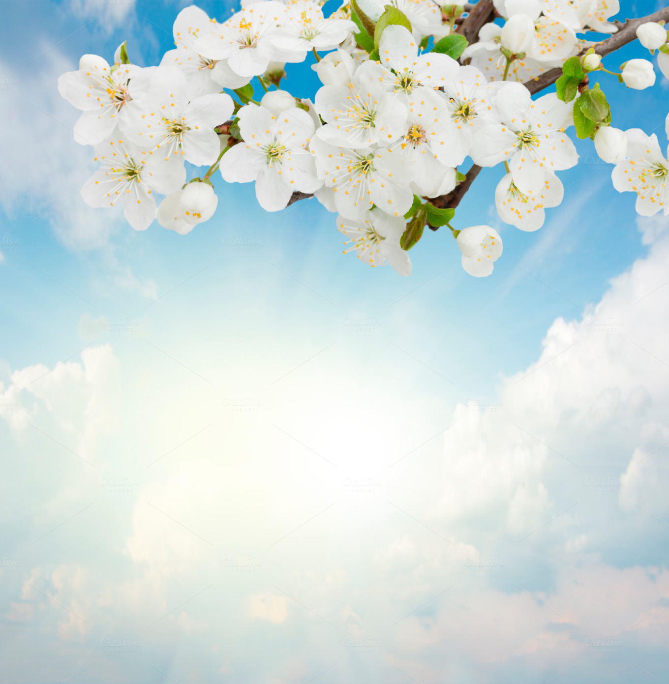 Blossoming-Plum-Flowers-on-sky-background