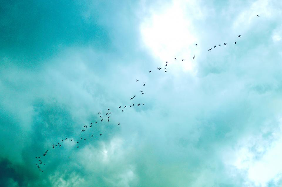 blue-sky-clouds-birds