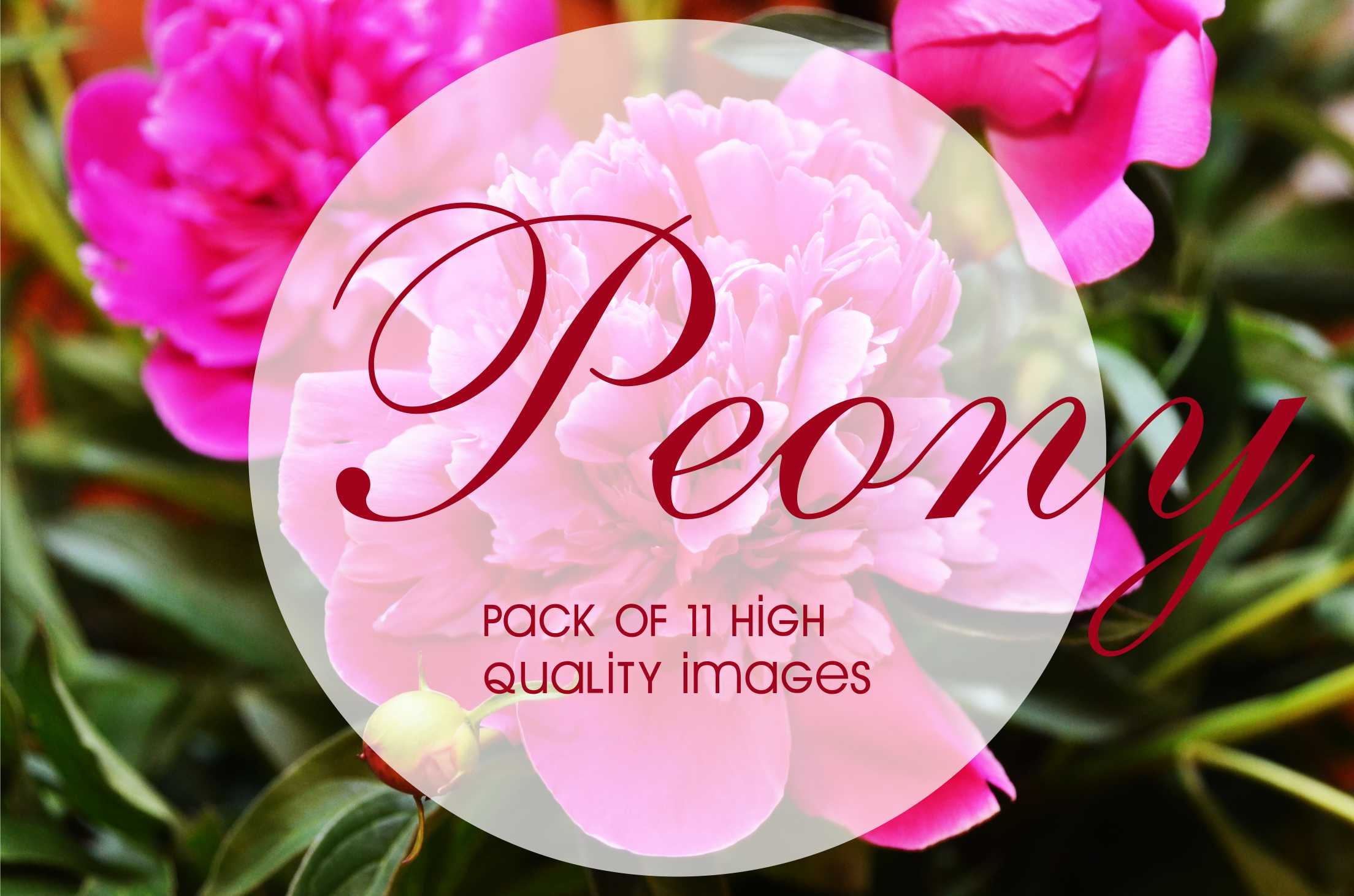 11-High-Quality-Images-of-peony