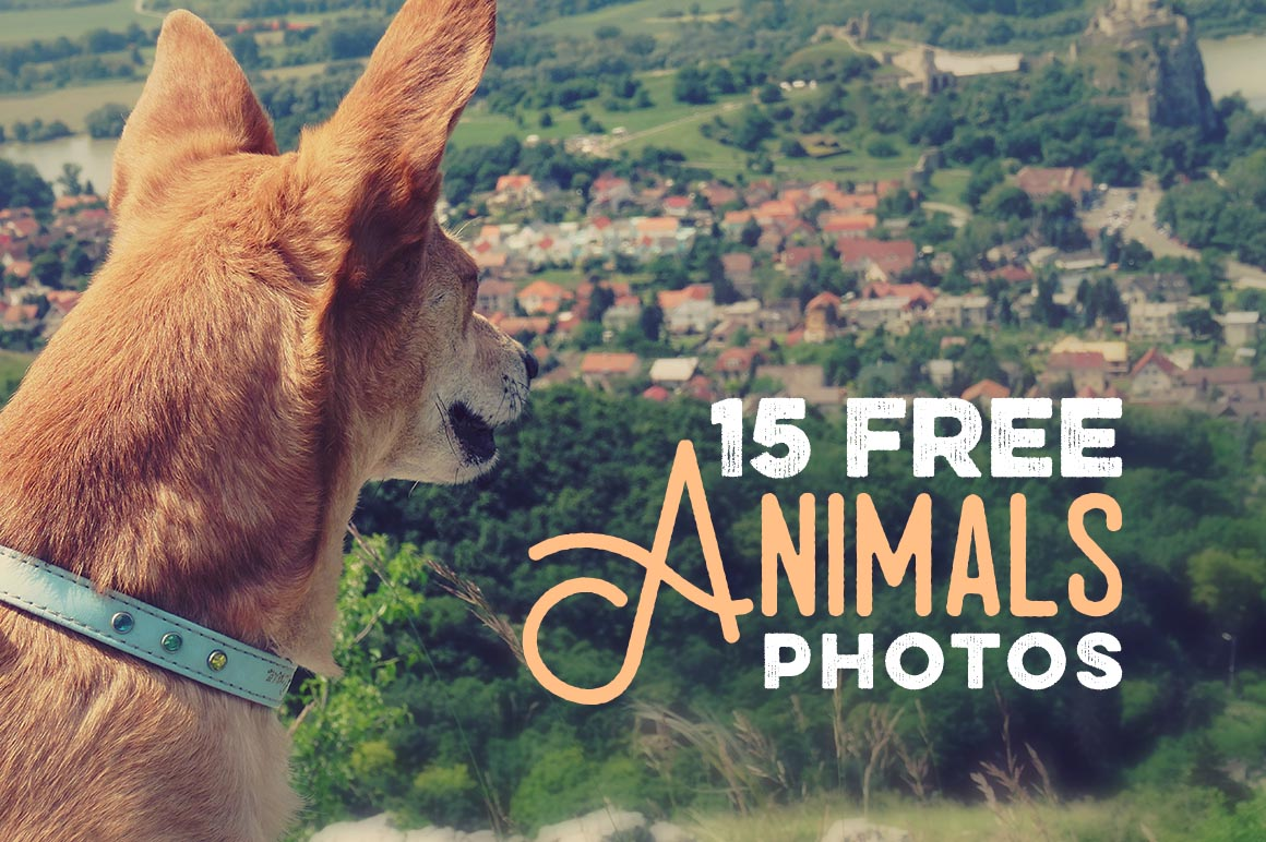 15-free-animals-photos