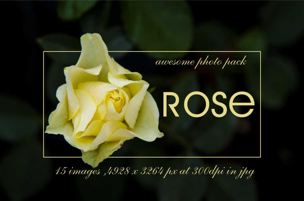 Rose-photo-pack