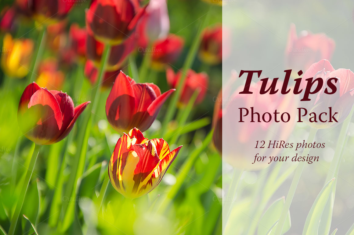 Tulips-Photo-Pack
