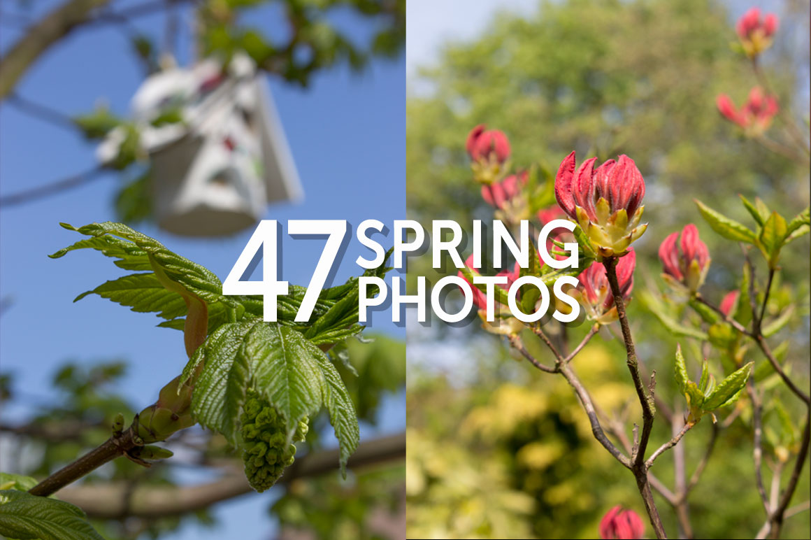 Spring-Blossom-Photo-Set