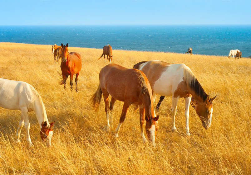 horses-near-the-sea-2