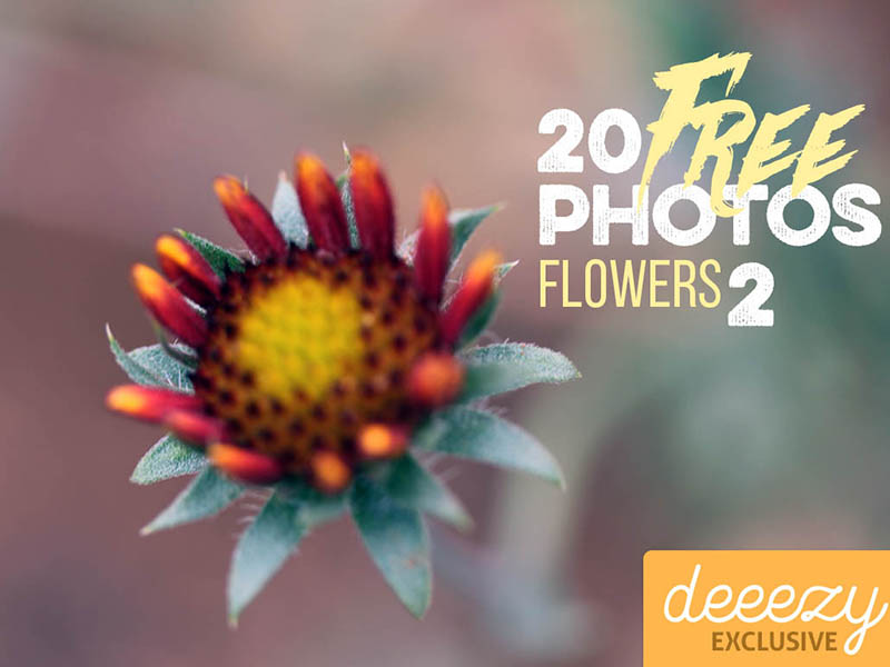 20-FREE-Flower-Photos-2