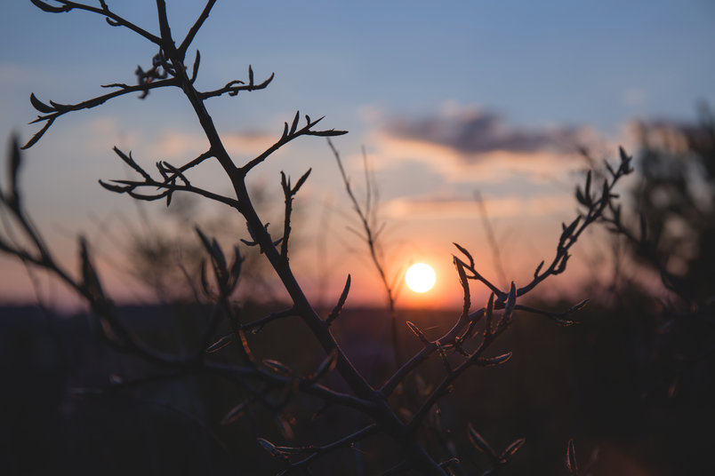 branches-sunset-2