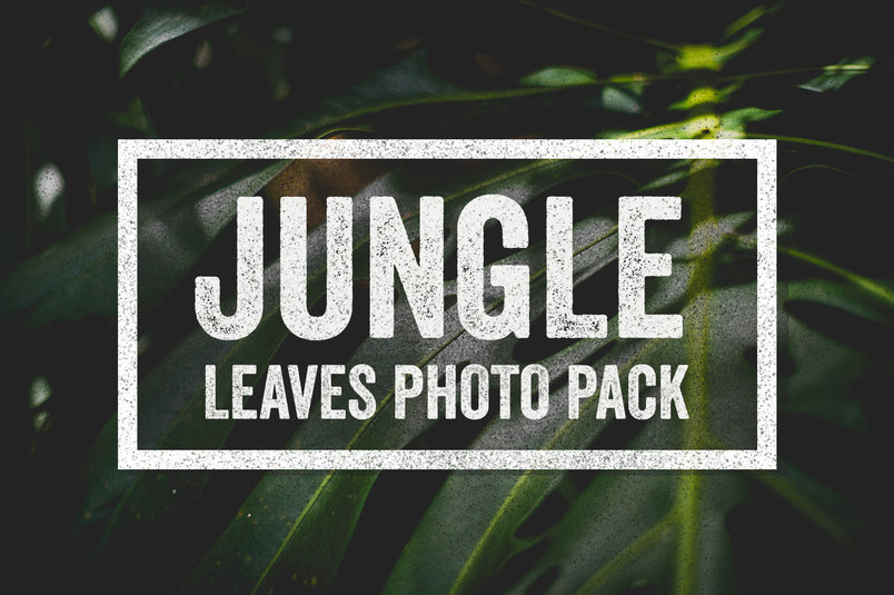 jungle-leaves-photo-collection-2