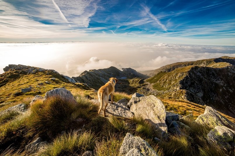 landscape-clouds-mountain-dog-2