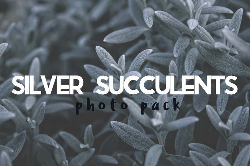 silver-succulents-photo-pack-2