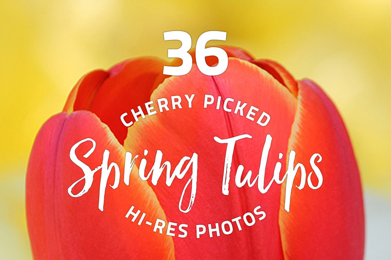 spring-tulips-photo-pack-2