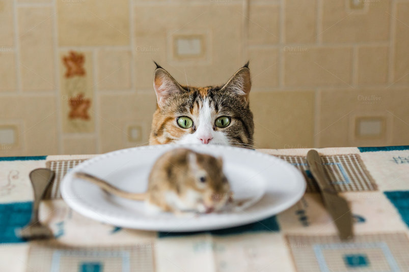 cat-looking-to-little-gerbil-mouse-on-the-table-before-attack-2