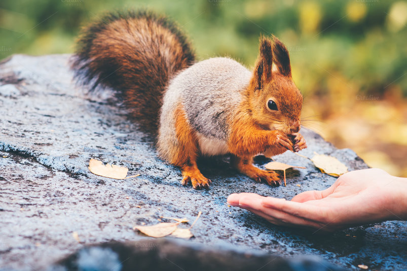 squirrel-eating-nuts-from-woman-hand-2