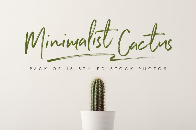 15-minimalist-cactus-photos-2