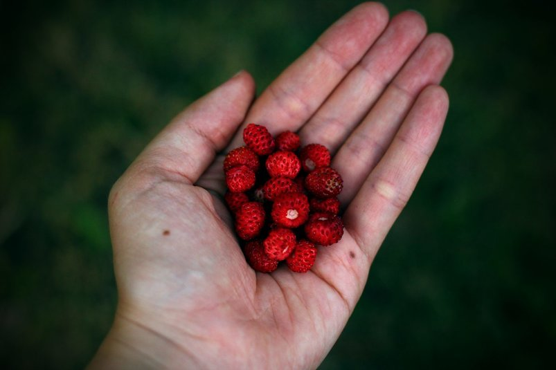 berries-in-hand-2