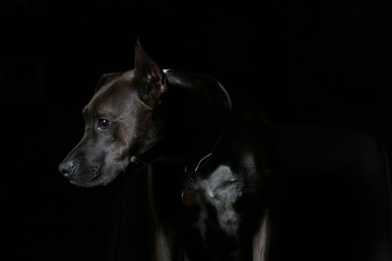 dog-in-the-dark-2