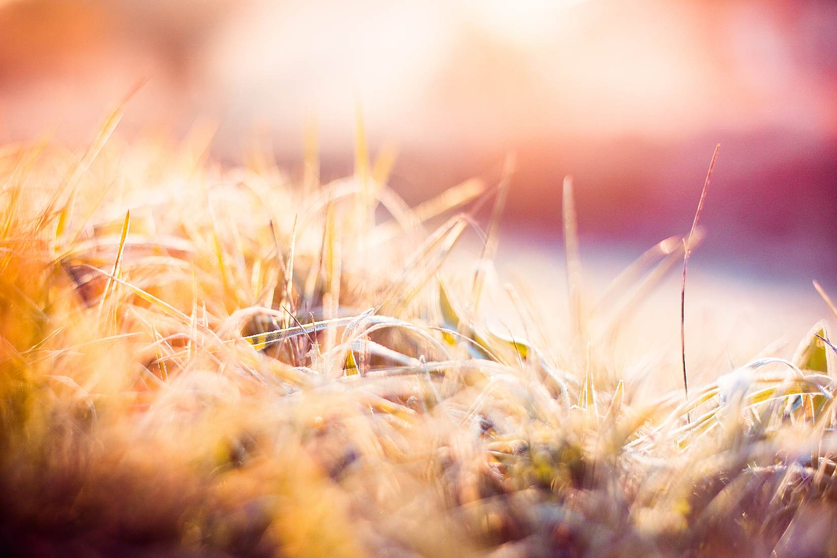 dreamy-morning-hoarfrost-on-grass