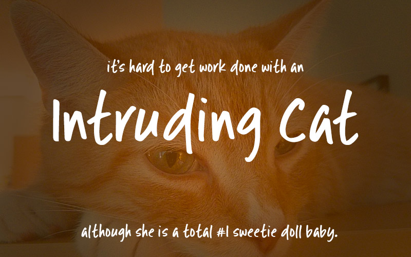 intruding-cat-font